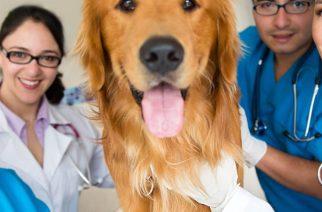 School of veterinary at University of Veterinary Medicine and Pharmacy in Kosice in Slovakia