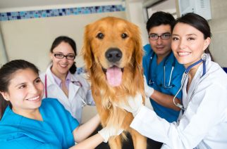 Group of doctors at the vet with a cute dog